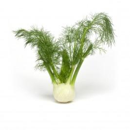 Fenouil légume