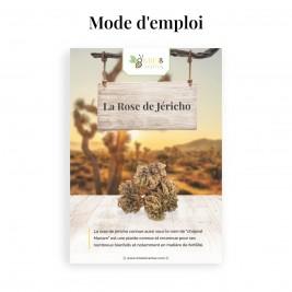 Rose de Jéricho (Chajarat Mariam) mode d'emploi