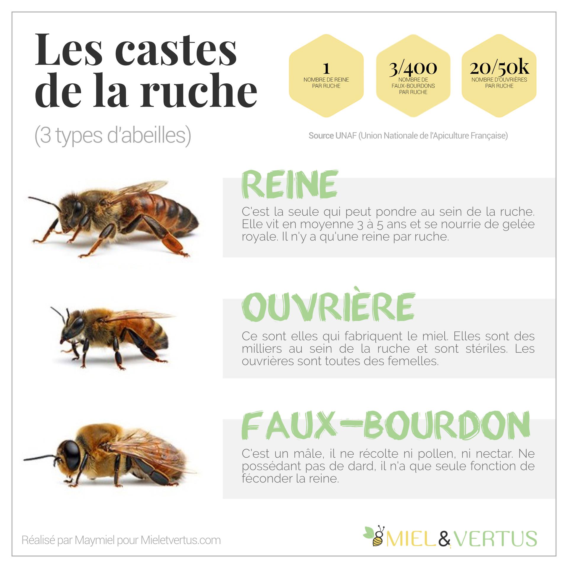 Les castes de la ruche