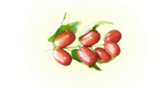 fruit-jujubier-yemen.png
