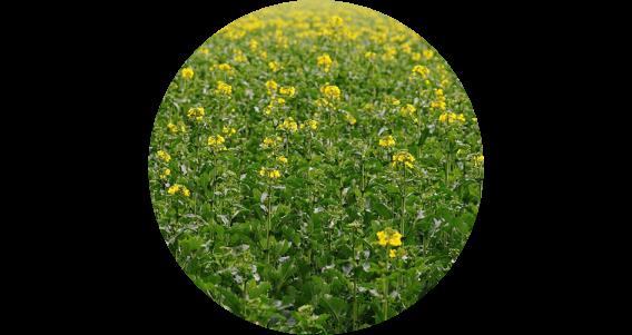 Miel de fleur de Printemps français